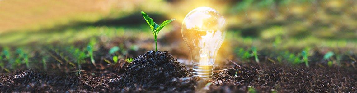 Energia, cambiamenti climatici e vegetazione forestale
