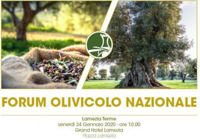 Forum olivicolo nazionale